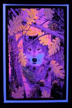 Poster fluo : loup d'automne